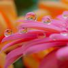 Pastel  Drop