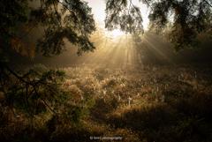 湿地に射す光