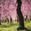 春の光、降り注ぐ