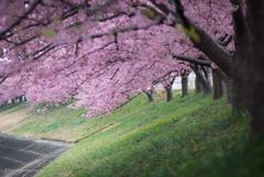 春のトンネル