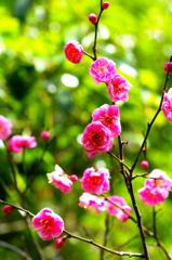 もうすぐ春~梅開花