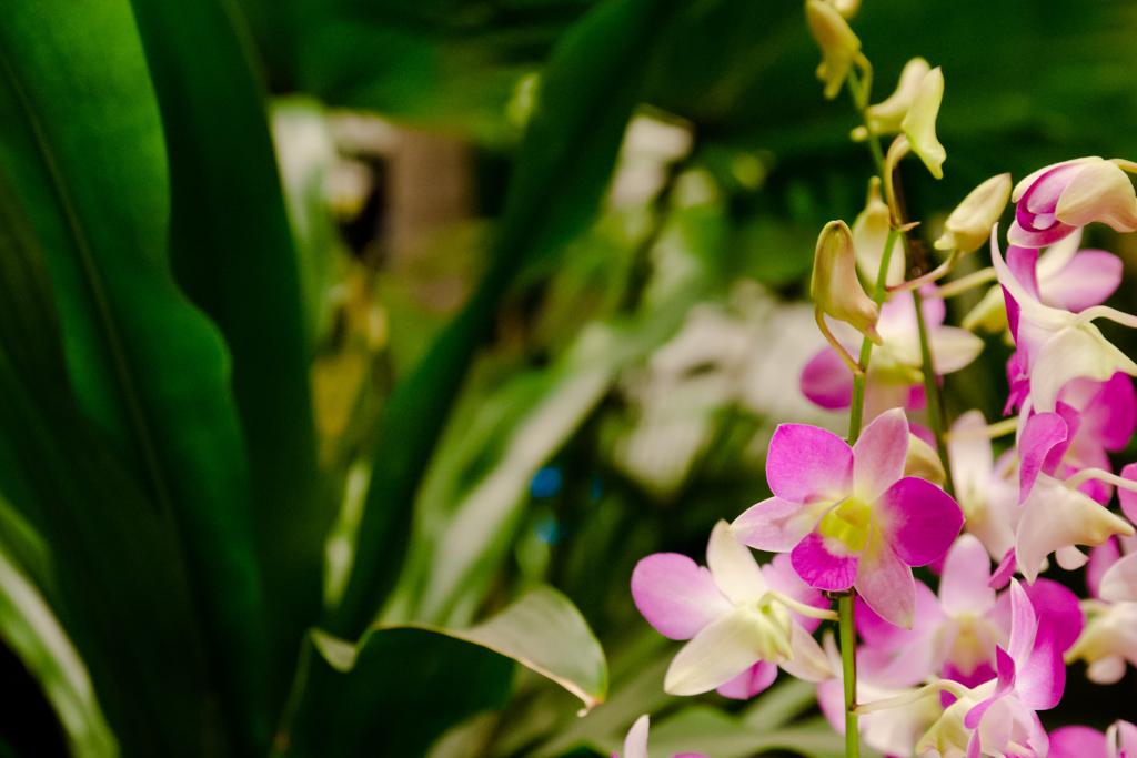 空港の中の花畑