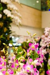 空港の中の花畑2