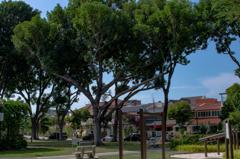 公園の巨木