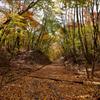 紅葉の登山道Ⅱ