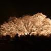 夜空に浮かぶ一心行の大桜
