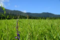 タデ原湿原の夏