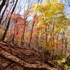 紅葉の登山道