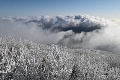 霧氷と雲海を望んで