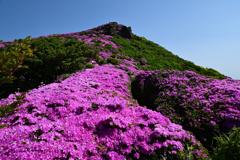 ミヤマキリシマ咲く登山道