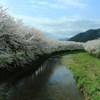 """春のぬくもり桜"""""""