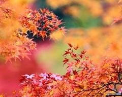 小春日和な秋