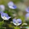 あぜみちに咲く小さな花