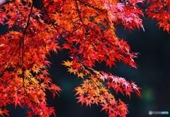 燃える秋 2016