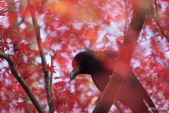 新宿御苑 紅葉狩り