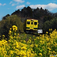 いすみ鉄道からの春の便り