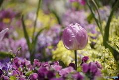 春色の花壇