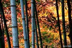 竹林 燃える