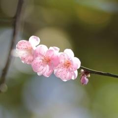 和かな春の日差し