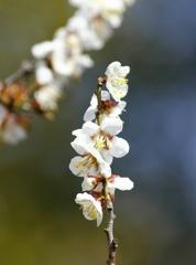 清らかな春の空へ
