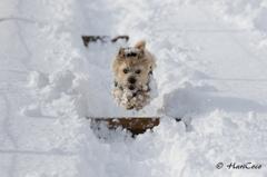 雪まみれでも跳ぶのだ!