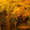 仏通寺-ライトアップ-④