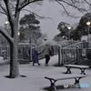 18豪雪・東京----⑧