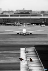 大きい翼と小さい翼と・・・