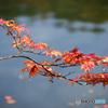 もう風は秋へ----④