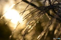 河川敷の光----②