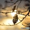 ある日の秋---③