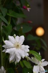 白い花とワンポイント