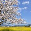 春の空の下で