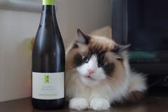 猫にワイン