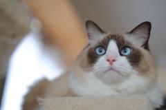猫見だいふく