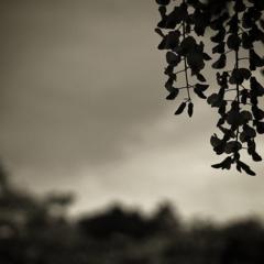 wistaria   ~藤~