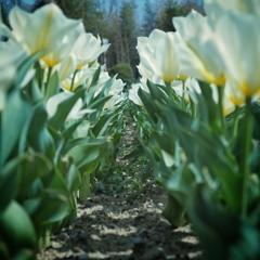 tulip arcade