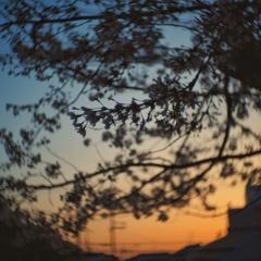 sunset bloom
