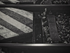 flowers on the railroad  crossing
