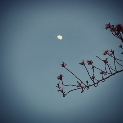 flowers and moon