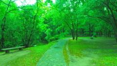 forest 森林浴