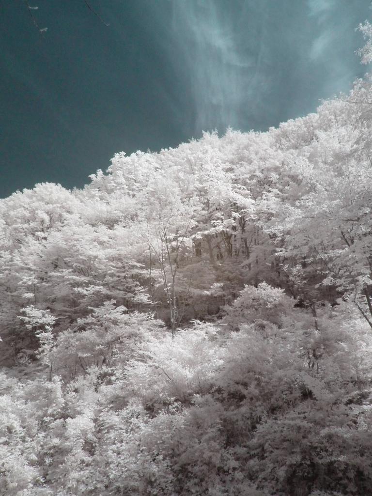 infrared landscape 79