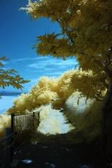 infrared landscape 92