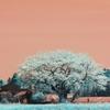 infrared landscape 22
