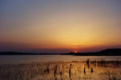 手賀沼の落陽