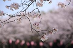 伊佐の春3