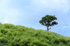 草原の囁き