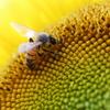 花粉まみれにお仕事。