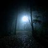 霧の中の薄暗い