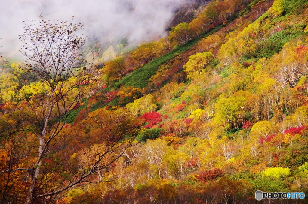 栂池自然園の思い出(大蔵だし2010年10月)